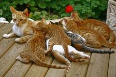 哺乳的小猫 免版税库存图片