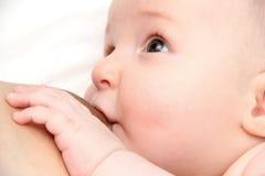 哺乳 免版税库存照片