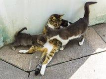 哺养和照顾在石地板上的三只小猫的母亲猫在公园小猫喝牛奶和使用与一晴朗的spri的妈妈 免版税库存照片