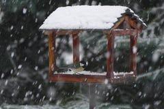 哺养在冬天的山雀 免版税库存照片