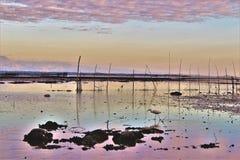 哺养在干盐湖的鸟 免版税库存照片