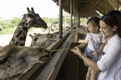哺养在您的大长颈鹿的手上的亚裔可爱宝贝女孩在动物农场背景中 库存照片