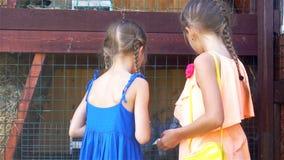 哺养的兔子 哺养农场与欧洲亚麻籽车前的小女孩家兔生叶 股票录像