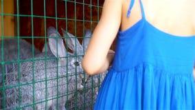 哺养的兔子 小女孩哺养的农场与欧洲亚麻籽车前的家兔生叶 股票录像