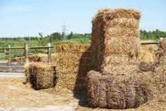 哺养的动物的干草堆在自然背景 免版税库存图片