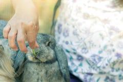 哺养食物兔子用一棵小红萝卜的妇女 选择聚焦o 库存图片