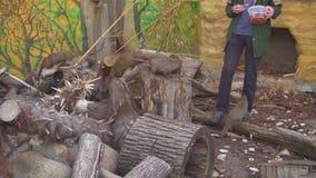 哺养Mogoose的人在动物园里 股票录像