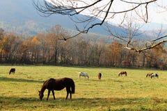 哺养与山背景的马 免版税库存照片