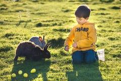 哺养两只兔子的小男孩在农场 图库摄影