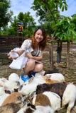 哺养兔子的妇女 免版税库存照片