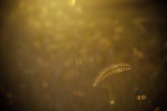 哺养在一朵黄色花的翱翔飞行 免版税库存图片