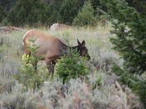 哺养在植物的鹿 免版税库存照片