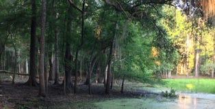 哺养在沼泽的鹿 免版税库存图片