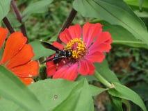 哺养在花花蜜的昆虫  免版税图库摄影