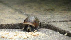 哺养在面包屑的老鼠在房子庭院里 影视素材