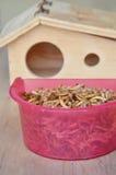 哺养的啮齿目动物或鸟的干蠕虫与蜥蜴和木房子 库存图片