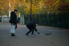 哺养的灰鼠在海德公园,伦敦 库存照片