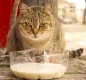 哺养的猫 库存图片