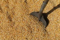 哺养的玉米 免版税库存照片