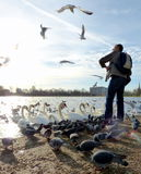 哺养的鸟在海德公园,伦敦 免版税库存图片