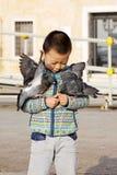 哺养的鸽子 库存照片