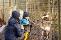 哺养的鹿 免版税库存图片