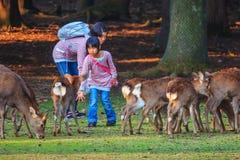 哺养的Sika鹿在奈良公园,日本 免版税库存图片