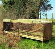 哺养箱子的牛 免版税库存照片