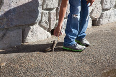 哺养花栗鼠 免版税库存图片