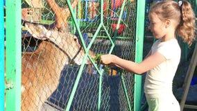 哺养被察觉的鹿的家庭女孩。 影视素材