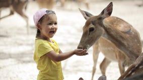 哺养被察觉的鹿的家庭小女孩 影视素材