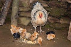哺养 免版税库存照片