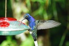 哼唱着的鸟 免版税图库摄影