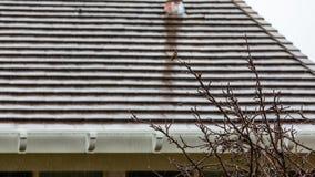 哼唱着鸟在雨中 免版税库存图片