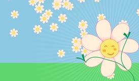 唤醒与雏菊的春天 免版税库存照片