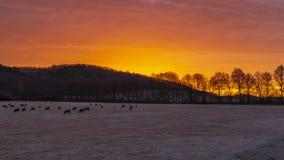 唤醒在冷淡的牧场地的羊羔 冻结的时间 库存照片