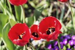 唤醒春天 非常好的细节本质上 免版税库存图片