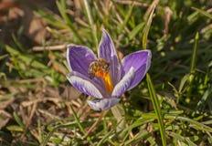 唤醒的春天 库存图片