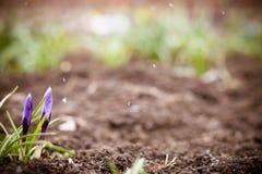 唤醒背景的春天 免版税库存图片