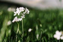 唤醒花的春天 库存照片