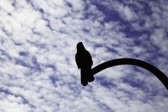唯一乌鸦坐光 免版税图库摄影
