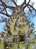 唯一异乎寻常的棘手的结构树 免版税图库摄影