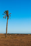 唯一棕榈在Douz突尼斯北非沙漠区域  库存照片