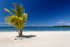 唯一棕榈树现出轮廓反对蓝色加勒比海在Roatan,洪都拉斯的手段 免版税库存照片