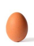 唯一棕色鸡 免版税图库摄影