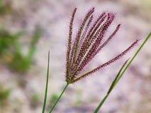 唯一植物群 自然花卉生活方式 图库摄影