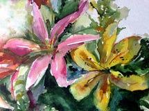唯一水彩艺术背景摘要精美淡黄色桃红色花的百合 免版税库存图片