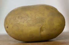 唯一的土豆 库存照片