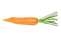 唯一的红萝卜 免版税库存图片