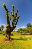 唯一的结构树 免版税库存照片